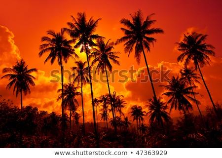 Coco palmas arena playa puesta de sol Foto stock © weltreisendertj