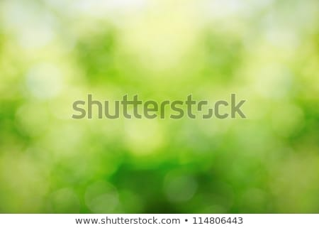 Sunny abstract green nature background, selective focus stock photo © nuiiko