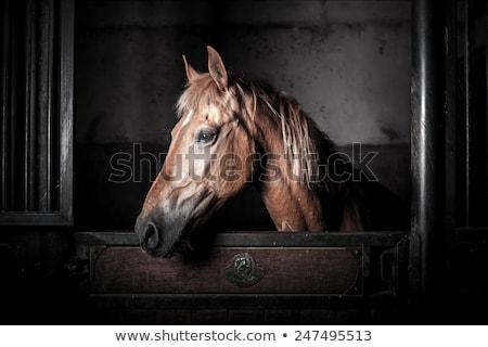 lovaglás · iskola · ló · istálló · épület · fa - stock fotó © meinzahn