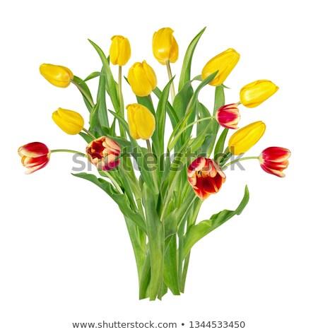 букет · рано · весенние · цветы · белый · цветы · рождения - Сток-фото © peredniankina