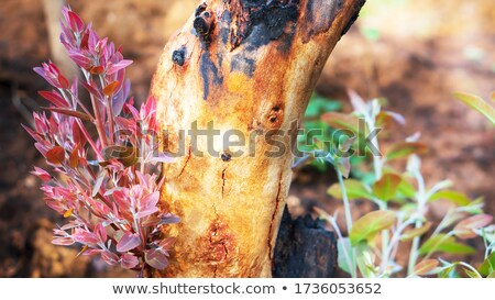 Tree Regrowth Stock photo © THP
