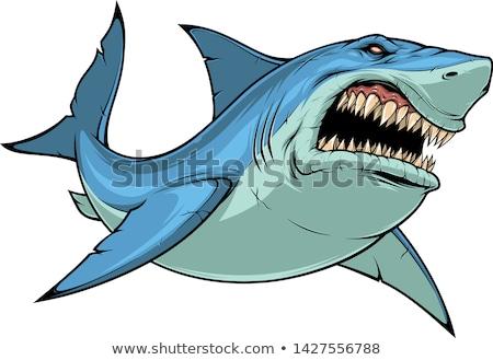 Zangado tubarão ilustração isolado branco azul Foto stock © liliwhite