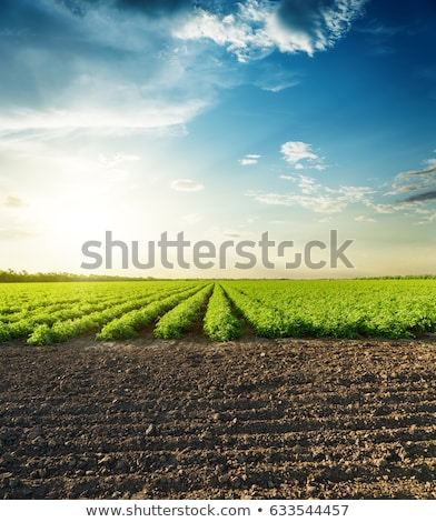 The green cultivated field and sky Stock photo © marekusz