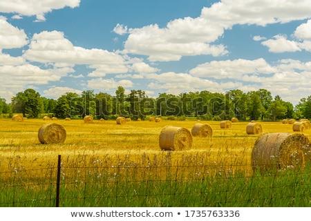 Hooi veld einde oogst seizoen gras Stockfoto © Niciak