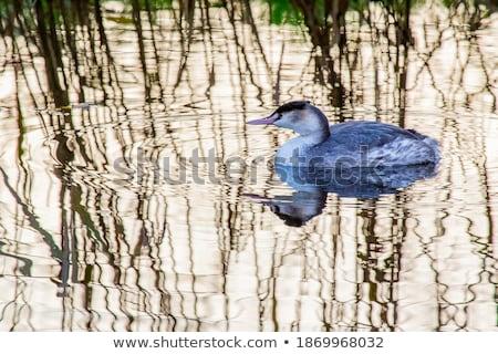 Muhteşem bebek geri bahar kuş yüzme Stok fotoğraf © mariephoto