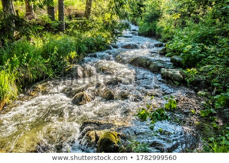 Mountain brook Stock photo © Kotenko