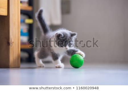 Stok fotoğraf: Oynama · kedi · yavrusu · gri · küçük · bahçe · doğa