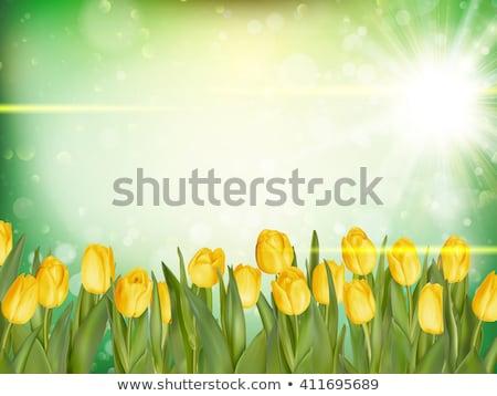 cadre · eps · 10 · fraîches · tulipes · vecteur - photo stock © beholdereye