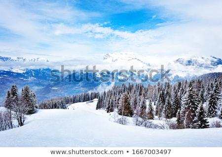 nieve · cubierto · pino · árboles · cielo · azul - foto stock © vlad_star