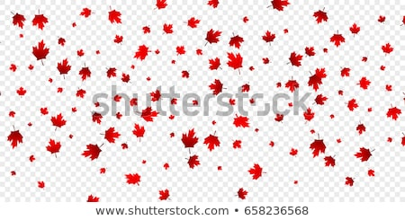 canada day background with maple leafs Stock photo © SArts