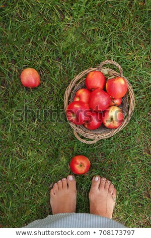 female legs near juicy red apples in a basket and scattered on g stock photo © tanach