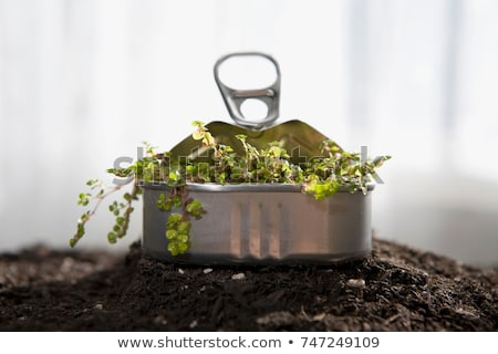 small plant sprouting in sardine can stock photo © is2