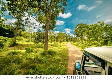 safari jeep tour on sri lanka stock photo © bezikus