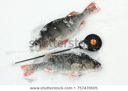 beyaz · buz · balık · tutma · hat - stok fotoğraf © Mps197