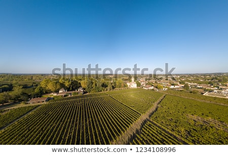 puesta · de · sol · otono · cosecha · maduro · uvas · cielo - foto stock © freeprod