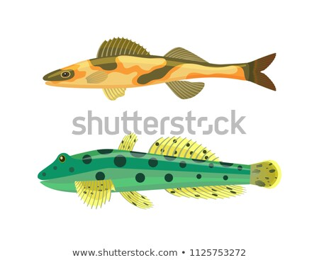 Photo stock: Poissons · zèbre · pointillé · corps