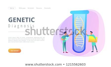 genetikai · tesztelés · tudósok · mappa · dolgozik · hatalmas - stock fotó © rastudio