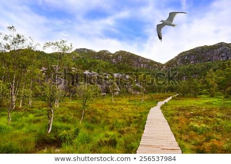 ノルウェー 観光 リュックサック 少女 山 ストックフォト © Kotenko