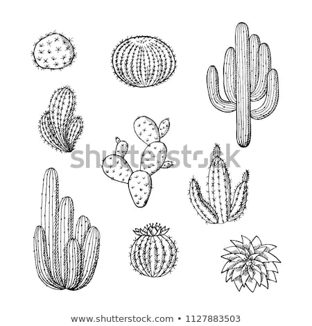 Round Desert Plant Cactus Ink Hand Drawn Vector Stock photo © pikepicture