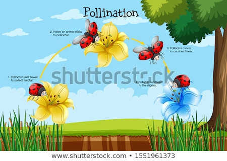 Diagram showing pollination with flower and bug Stock photo © bluering