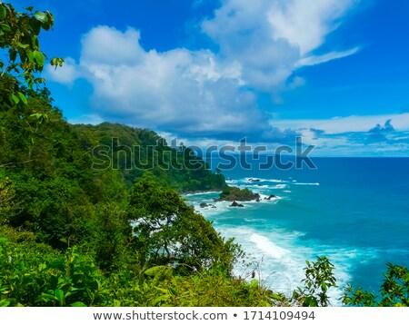 Costa Rica Jungle Beach stock photo © mtilghma