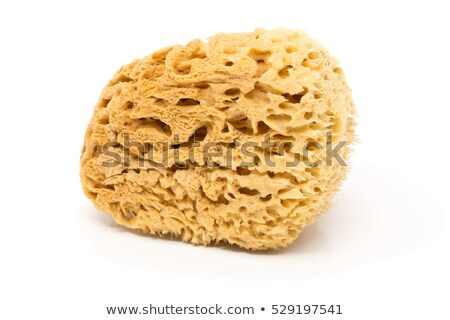 yellow natural sponge Stock photo © prill