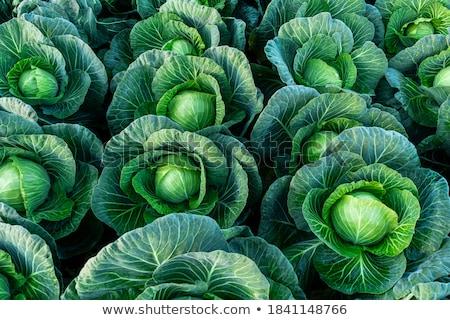 mavi · lahana · tahta · tablo · kırmızı · sebze - stok fotoğraf © witthaya