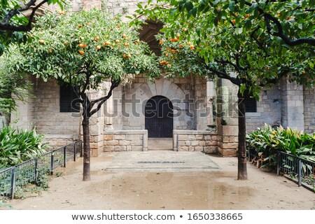 door to garden with orange tree Stock photo © neirfy