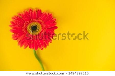 красочный · цветок · весны · природы · завода - Сток-фото © pakhnyushchyy