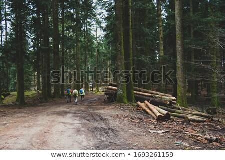 emberek · hátizsák · trekking · fa · csoport · férfi - stock fotó © diego_cervo