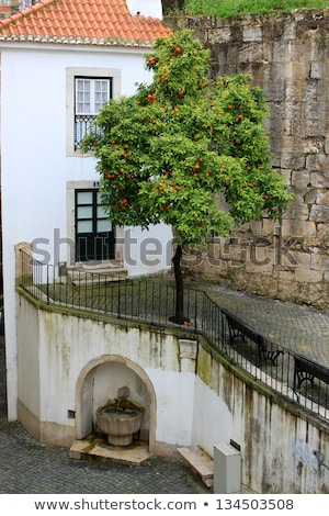 Narancsfa szökőkút macskakő tér Lisszabon Portugália Stock fotó © gvictoria