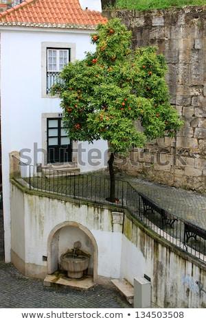 Orange tree and fountain in Alfama stock photo © gvictoria
