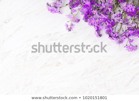 Stok fotoğraf: Grunge · çiçekler · çerçeve · vektör · bahar · çiçekleri