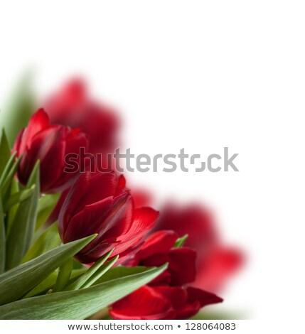 tulipán · flor · Blur · ilustración · flores · resumen - foto stock © barbaliss