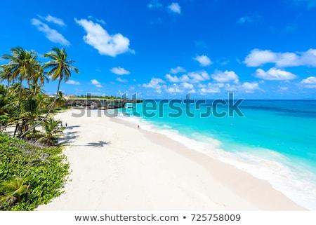 ボトム · バルバドス · カリビアン · ツリー · 風景 · 海 - ストックフォト © phbcz
