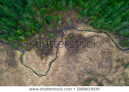 Arroyo pequeño transmisión soleado valle hierba Foto stock © Steevy84