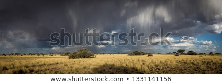 Lodge in the Kalahari Stock photo © dirkr