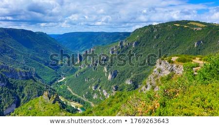 the Gorges of Tarn Stock photo © njaj