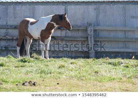馬 · ファーム · ランチ · 納屋 · 自然 - ストックフォト © njnightsky