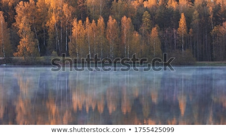 秋 霧の 公園 木 秋 霧 ストックフォト © SergeyAndreevich