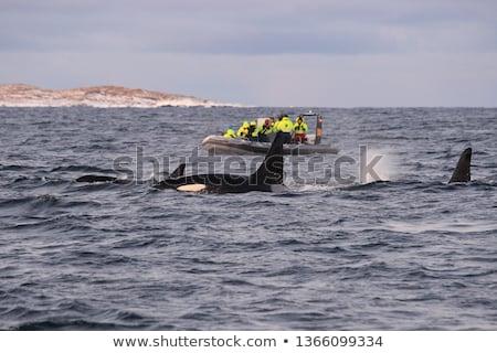 vetor · mar · peixe · predador · oceano · saltar - foto stock © orensila