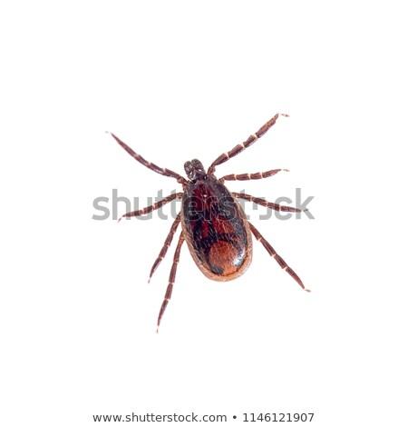 Női közelkép újrahasznosít papír piros rovar Stock fotó © smuay