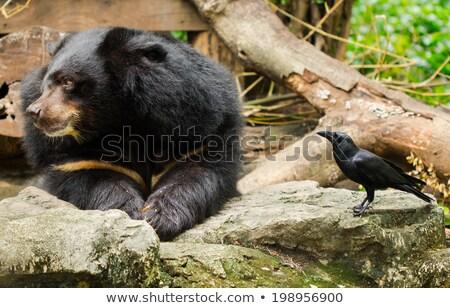 Diverso animali selvatici zoo illustrazione natura panorama Foto d'archivio © bluering