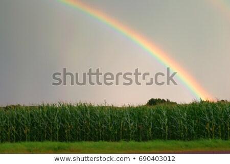 Tęczy gospodarstwa dziedzinie chmury okładka niebo Zdjęcia stock © brianguest
