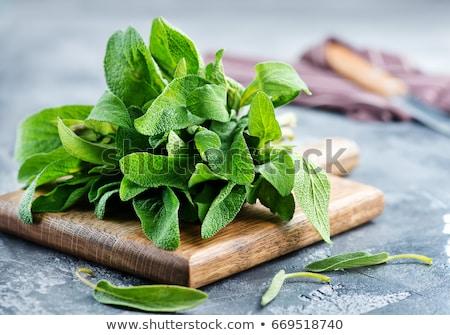 Frescos salvia bordo mesa verde medicina Foto stock © tycoon