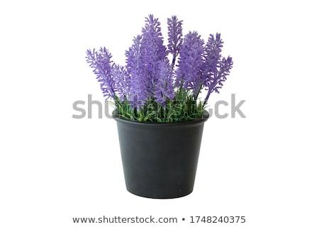 Renkli plastik çiçek grup bitki konteyner Stok fotoğraf © dezign56