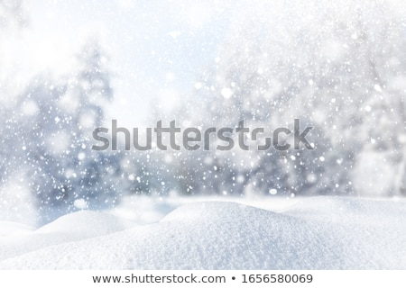 Zimą krajobraz mroźny drzew mętny niebo Zdjęcia stock © ondrej83