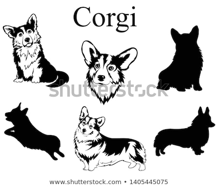 Isolated black outline head of happy welsh corgi pembroke or cardigan on white background. Line cart stock photo © olkita