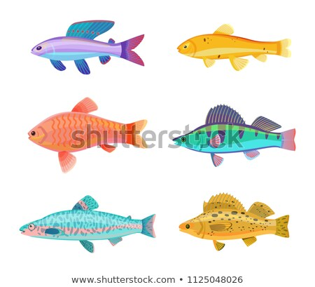 Zebra and Jewel Cichlid Set Vector Illustration Stock photo © robuart