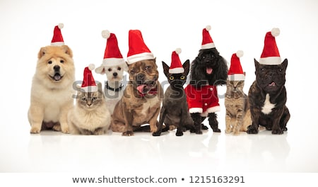 group of eight adorable santa cats and dogs with costumes Stock photo © feedough